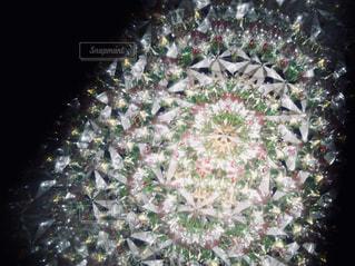 万華鏡の花の写真・画像素材[1401705]