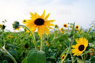 近くに黄色い花のアップの写真・画像素材[1205291]