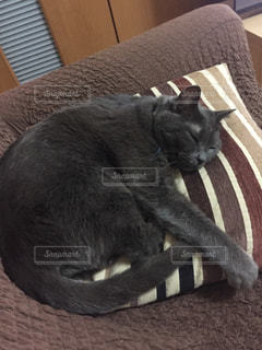 猫,お部屋,部屋,室内,ソファー,睡眠,のんびり