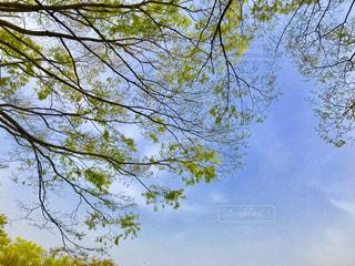 新緑と青空の写真・画像素材[1103467]