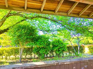 ベンチからの新緑の風景の写真・画像素材[1164766]