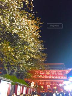 桜の終わりの写真・画像素材[1124592]