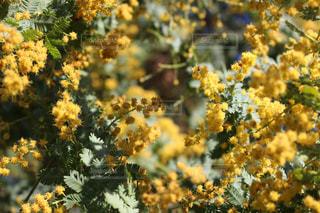 近くに黄色い花のアップの写真・画像素材[1140970]
