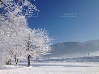 雪の木の写真・画像素材[1109105]