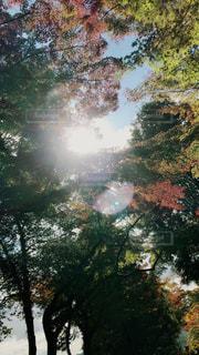 太陽の光の写真・画像素材[1158327]