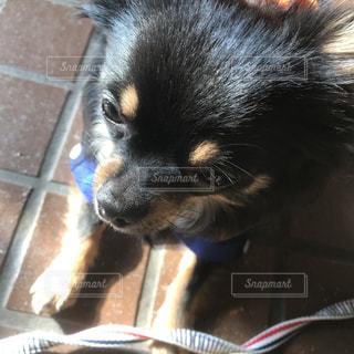 犬のアップの写真・画像素材[1184120]
