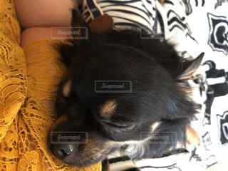 横になっている茶色と黒犬の写真・画像素材[1184223]