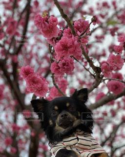 小さな黒い犬の写真・画像素材[1875744]