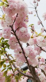 近くの花のアップの写真・画像素材[1886125]
