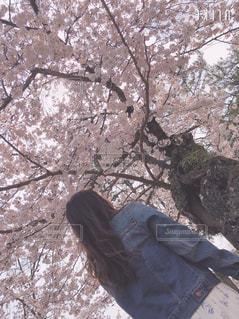 女性,花,桜,屋外,樹木,人物,背中,人,後姿,後ろ