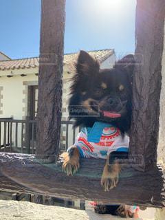 笑ってる愛犬の写真・画像素材[2326311]