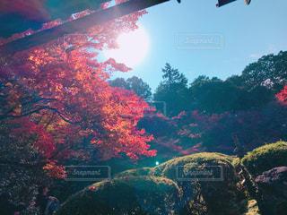 光のさすの写真・画像素材[2624519]
