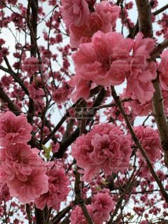 植物の上のピンクの花のクローズアップの写真・画像素材[3018960]