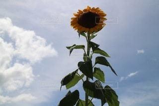 花のクローズアップの写真・画像素材[3496171]