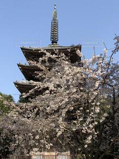 京都,景色,樹木,五重塔,醍醐寺,さくら,枝垂れサクラ