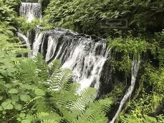 森の中の大きな滝の写真・画像素材[1488686]