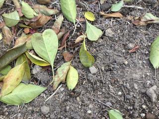 自然,緑,枯れ葉,黄色,落ち葉,ハート