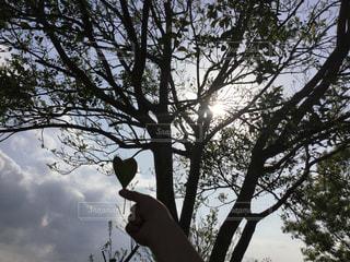自然,空,春,木,枯れ葉,手,子供,落ち葉,樹木,ハート,日中,シマトネリコ,おちば
