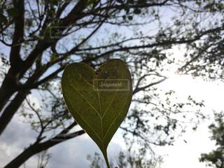 自然,空,春,木,枯れ葉,手,落ち葉,樹木,ハート,日中,シマトネリコ,おちば