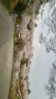 桜,絶景,レジャー,神奈川県,相模湖プレジャーフォレスト