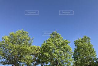 新緑と青空の写真・画像素材[1130362]
