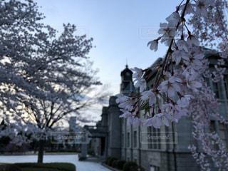 桜,山形市,フォトジェニック,山形県,花絶景