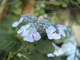 公園,花,花束,カラフル,あじさい,景色,鮮やか,紫陽花,草木
