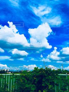 夏の写真・画像素材[1312471]