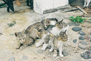 土の上に横たわる猫の写真・画像素材[2292797]
