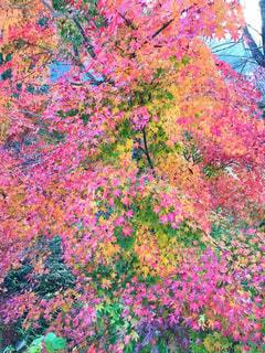 紅葉,日光