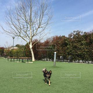 背景の木と緑のフィールドの人の写真・画像素材[1205703]