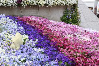花,春,東京タワー,東京,植物,カラフル,お花,芝公園