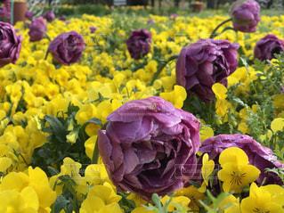 春の花 - No.1122517