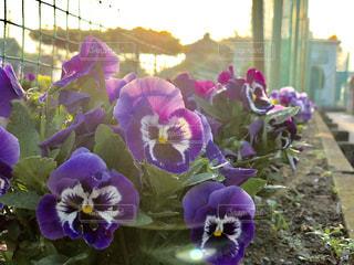 公園の花 - No.1123925