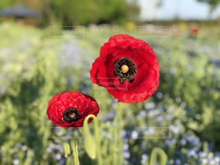 近くの花のアップ - No.1135784