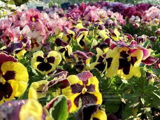近くの花のアップ - No.1135792