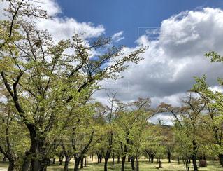 公園の大きな木 - No.1161952
