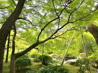 日本庭園 - No.1166801