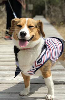 犬,自然,屋外,ペット,旅行,笑顔,蓼科