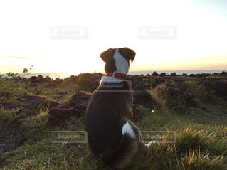 サンセットを見る犬の写真・画像素材[1184123]