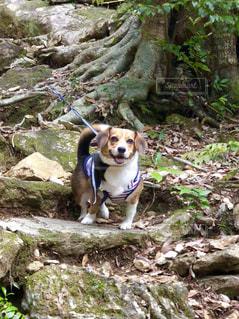 岩の上に座っている犬 - No.1192985