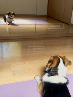 犬ヨガの写真・画像素材[1214832]