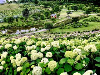 紫陽花公園 - No.1216719