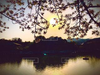 風景,花,春,桜,屋外,湖,夕暮れ,水面,日差し,樹木,お花見,日本,和風,枝垂れ桜