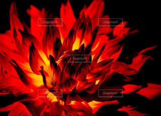 恋の炎の写真・画像素材[1146169]
