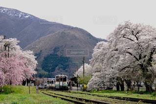 ローカルな春の風景。の写真・画像素材[1146234]