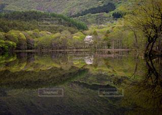 観音沼に咲く桜の写真・画像素材[1146385]
