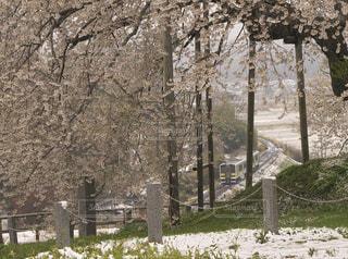 戸津辺の桜とローカル線の写真・画像素材[1146407]
