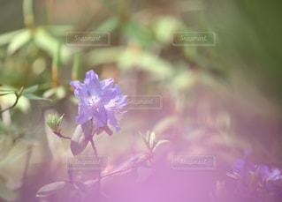 近くの花のアップの写真・画像素材[1157390]