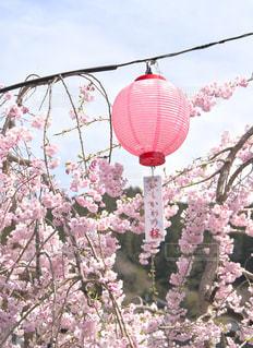 春を待ちわびて - No.1195864